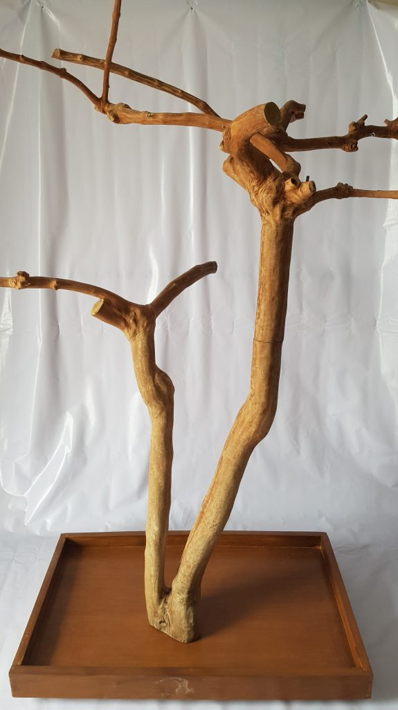 Java wood tree, Java wood tree play stand, Java wood tree for sale, Java wood tree stand, Java wood tree for parots, Parrot stand wood, Java wood parrot play stand, Bird play stand, Bird perch, Java wood perch, Java wood perches, Java wood branches, Java wood bird perches, Java wood bird stand, Java wood parrot stand, coffee tree